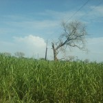 Une telle cohabitation entre une ligne 30 000 volts à proximité d'un arbre comme le Kadd ne saurait être acceptable.